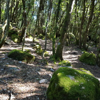 Un Week-end en Alta Rocca, entre archéologie et randonnées familiales