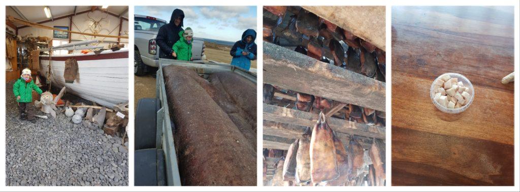 Transformation du requin faisandé: pêche, faisandage, séchage, dégustation