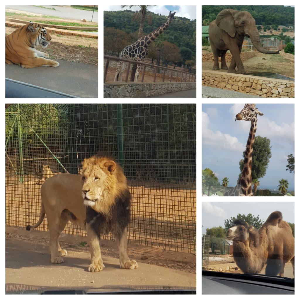 Voyage dans les Pouilles en famille, le zoosafari Fasanolandia