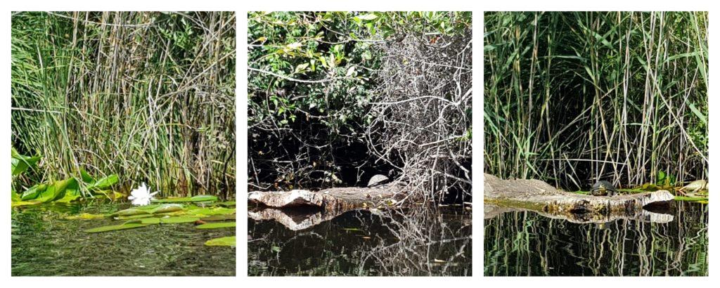Découverte de la faune et de la flore dans le delta du Fango