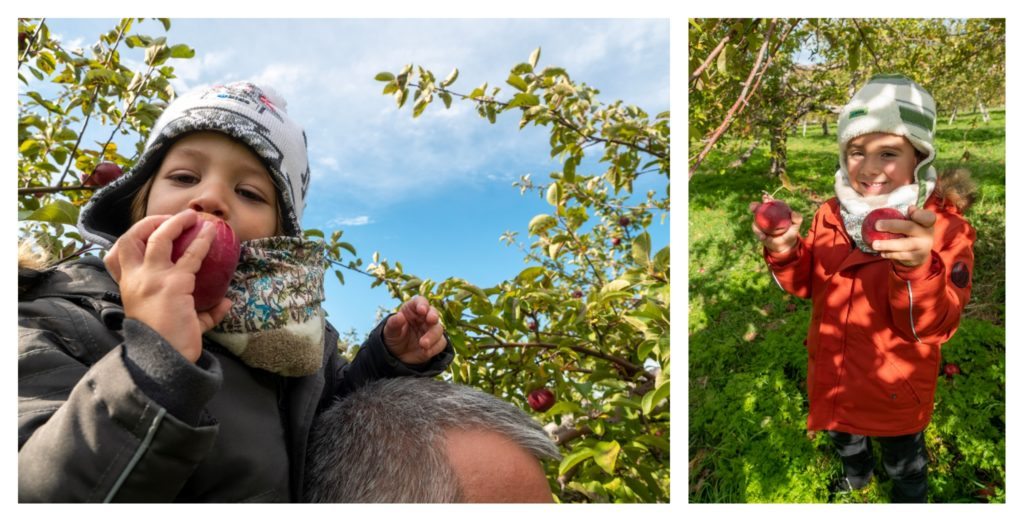 Auto cueillette des pommes sur le mont Saint Hilaire