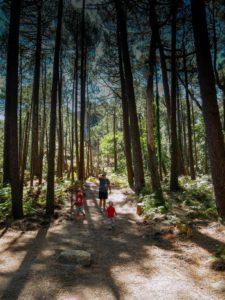 Le café des voyageurs En forêt. La forêt de l'ospedale