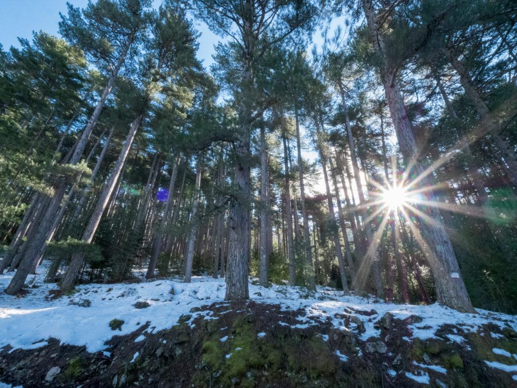 Forêt d'Aitone, Evisa, Corse du Sud